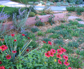 low water use xeriscape