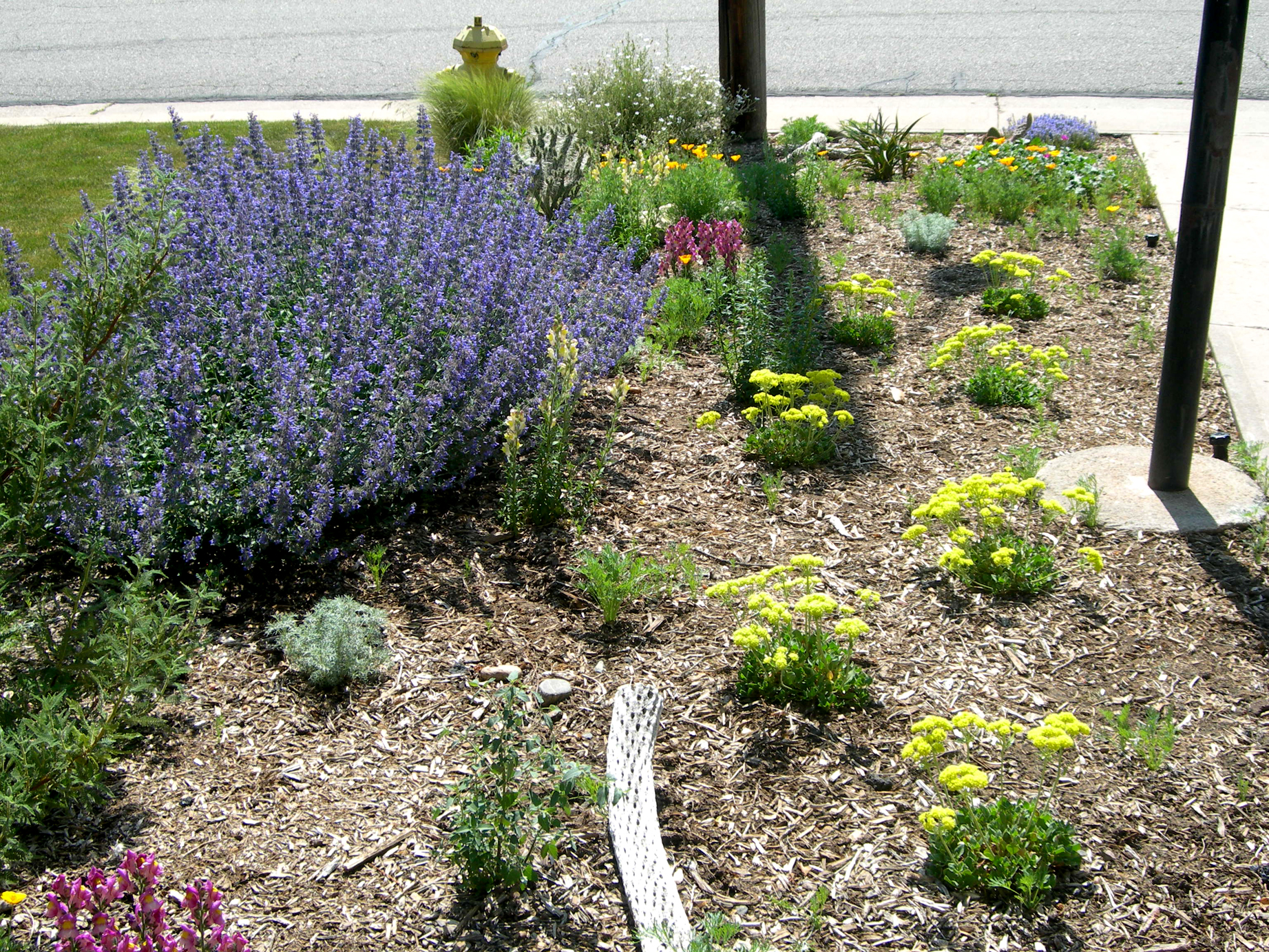 Xeriscape lot lines for Garden design xeriscape