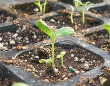 Seed Start 6