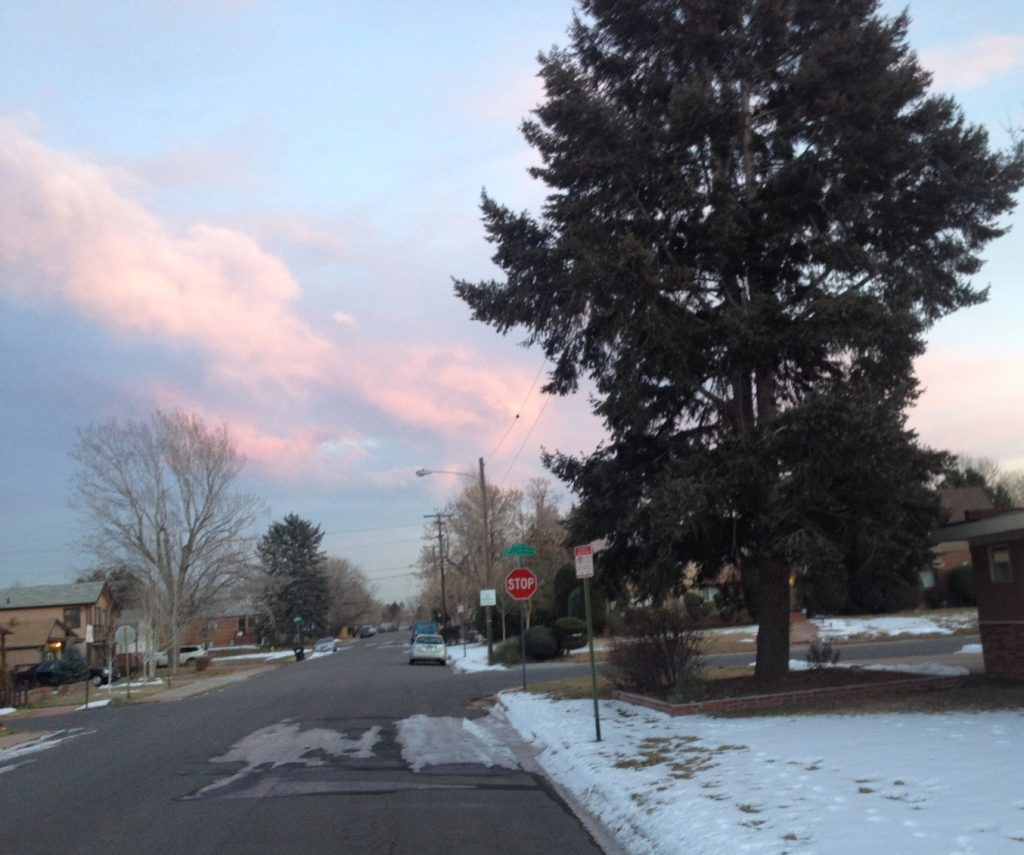 ban evergreen trees from urban areas in colorado lot lines