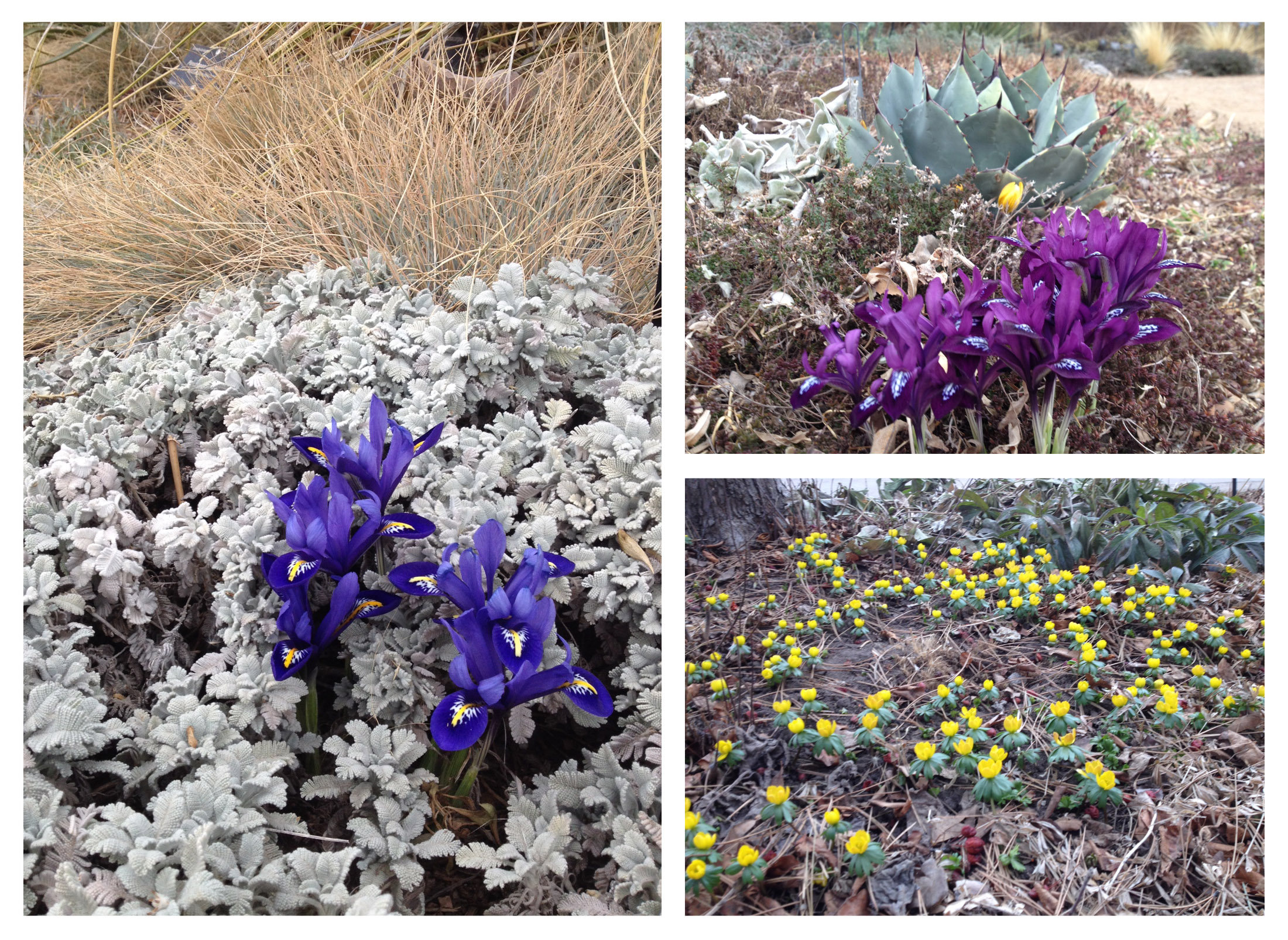 photos of the day early spring blooms at the denver botanic